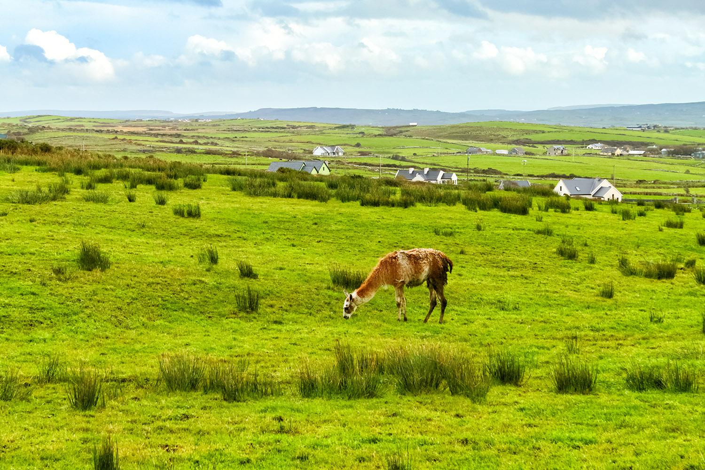 のんびりした時間が流れるアイルランドの牧場地域