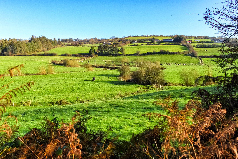 緑が広がるアイルランドの大地
