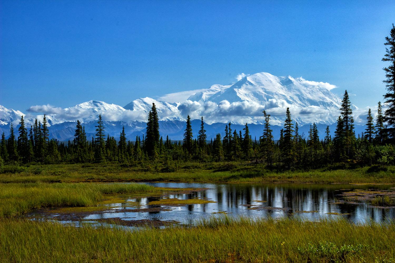 アラスカの森とマッキンリー山(デナリ)の氷河
