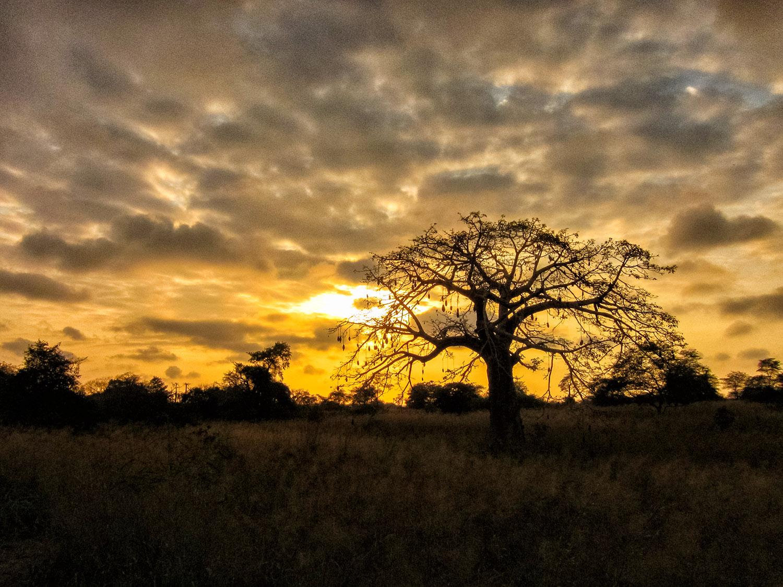 アフリカ・アンゴラの立ち木を染める夕陽
