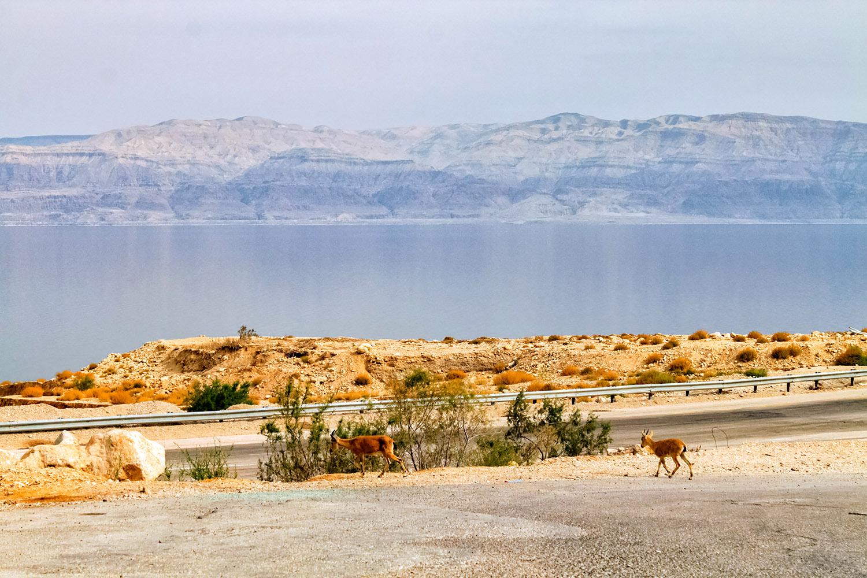 静かな散歩道、死海のほとり