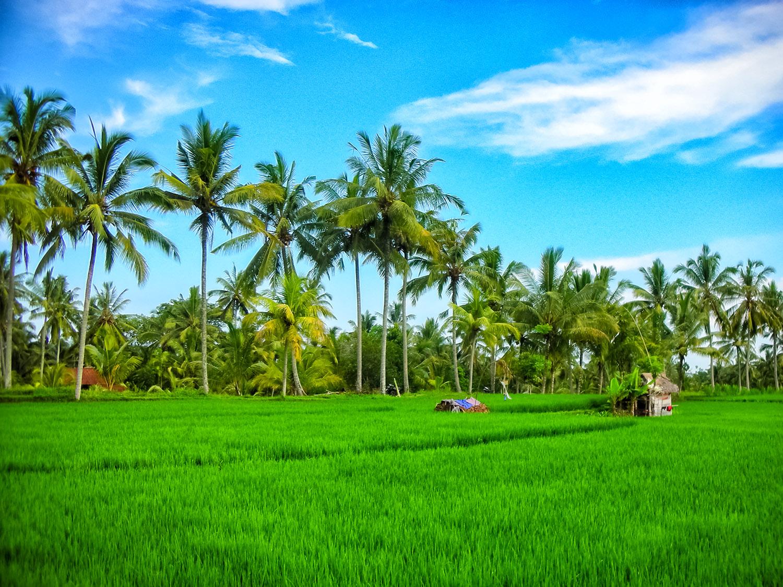 ジャワ島の田畑