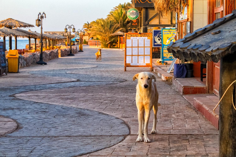 ダハブの海岸
