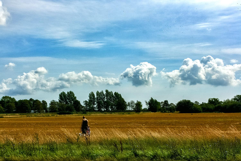 デンマークのアイランド、ロラン島の牧草地帯