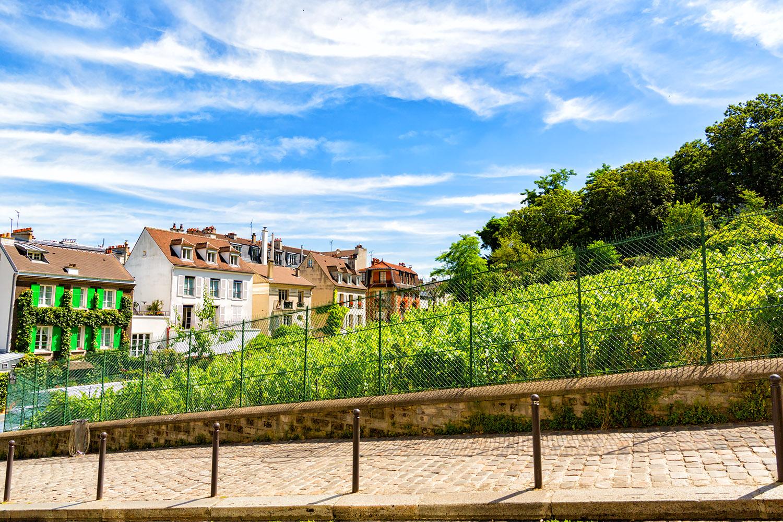 モンマルトルのワイン畑