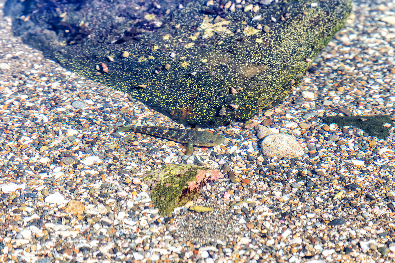 浅瀬を泳ぐ小さな魚