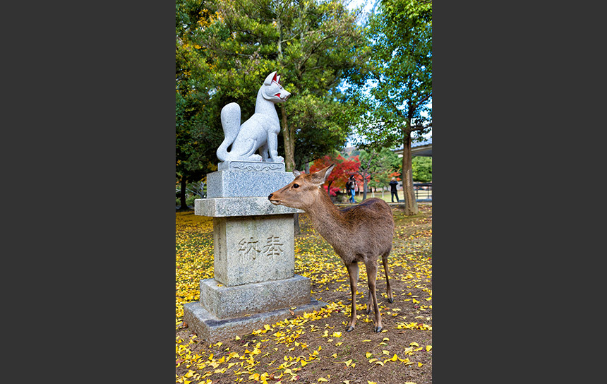 奈良の風物詩、紅葉と鹿