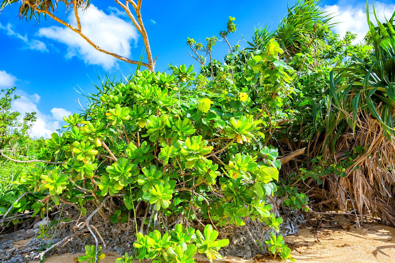 緑と海の楽園といえば石垣島