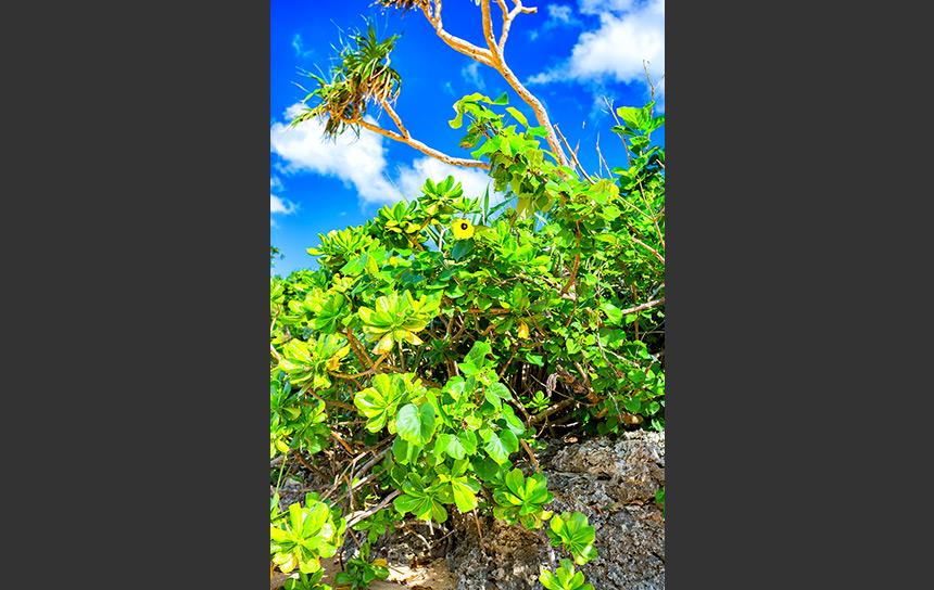 晴れ上がる石垣で育つ海岸の植物