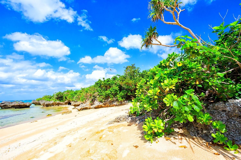 目にも鮮やか、青と緑の世界が広がる石垣島