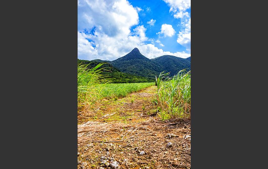 沖縄で一番高い山は石垣島の於茂登岳