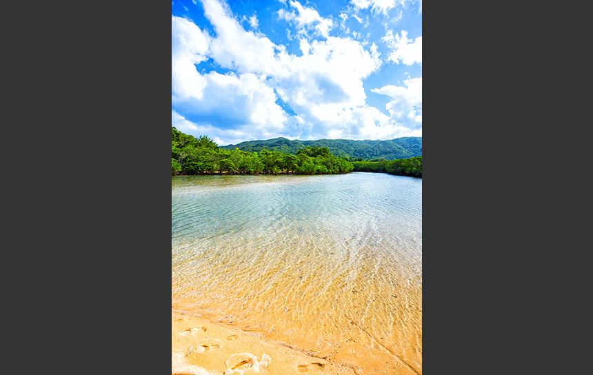 石垣島吹通川、マングローブが自生する砂場
