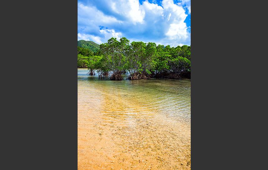石垣島の透き通る川面と言えば吹通川