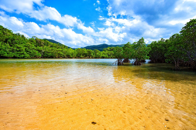 海水と川が入り混じる石垣島の吹通川
