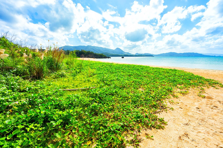 石垣島の砂浜に自生する植物群