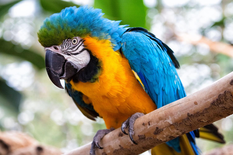 青と黄色が鮮やか!ルリコンゴウインコ