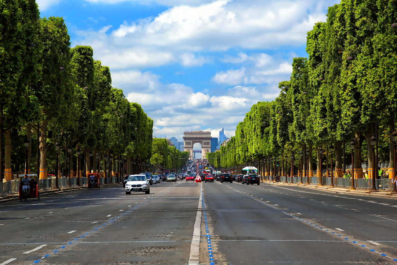 フランス・パリ、緑に輝くシャンゼリゼ通りのマロニエ並木