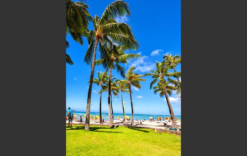 南国ハワイの青い空にそよぐ緑のヤシの葉