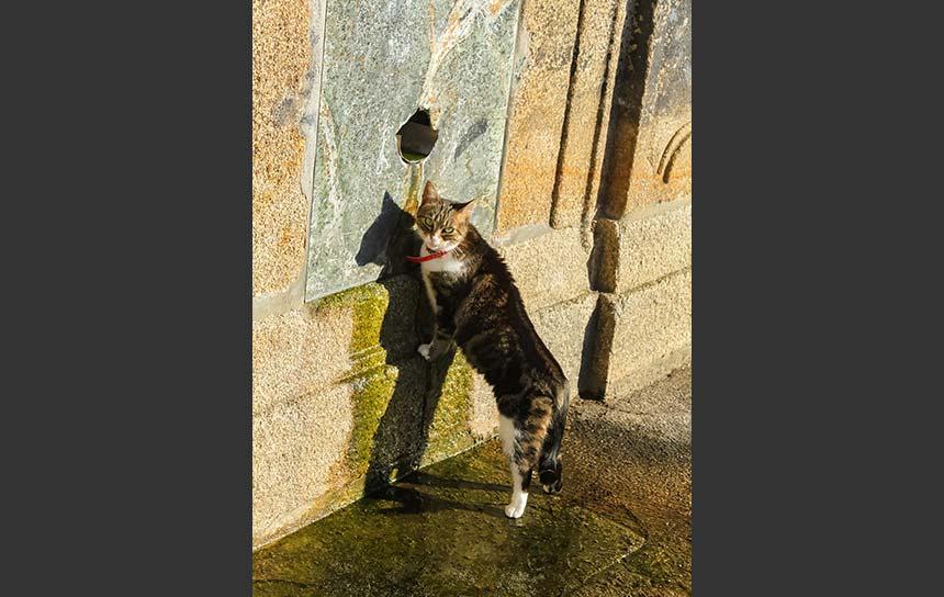 ポルトガル、給水所の水をなめる猫さん