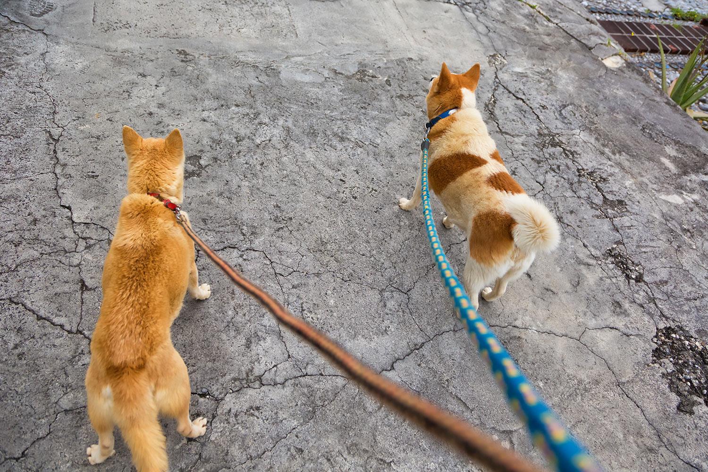 お散歩中の犬 無料壁紙 商用利用可の画像素材ならfotoma フォトマ