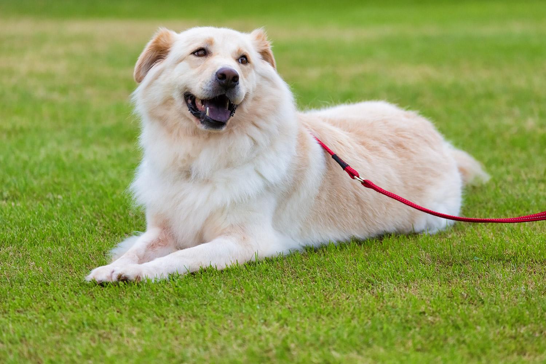 芝生でくつろぐMIX犬