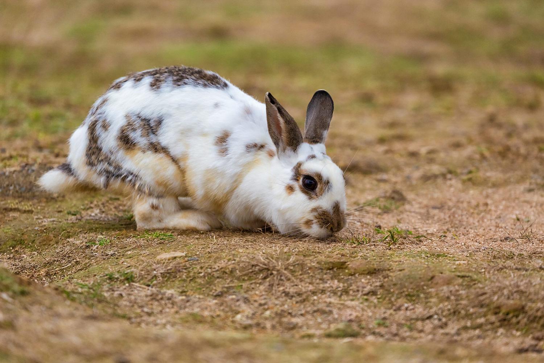 お外で遊ぶウサギ
