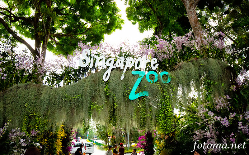 シンガポール動物園をご紹介!動物一覧や、動物画像もたくさん!
